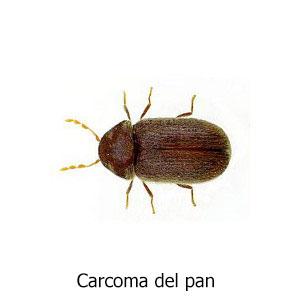 carcoma-pan titulo